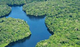 Nature Observatory of Amazonia (NOA) South America 2014