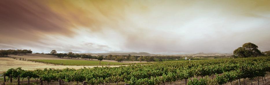 Landscape, Architecture & Wine